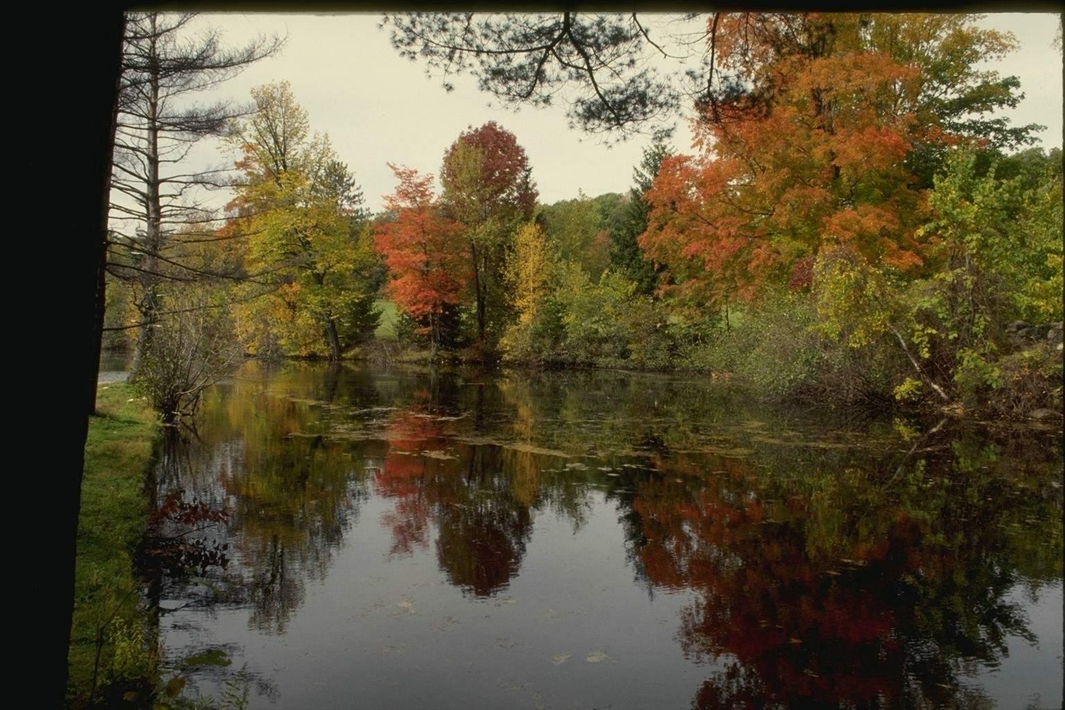 Живой звук осень фото 3
